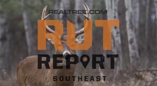 Southeast Rut Report: The Rut Is Winding Down for Remaining Southern Deer Hunters