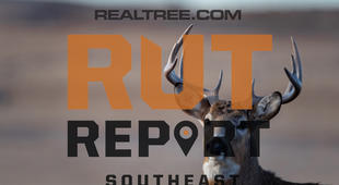 Southeast Rut Report: The Rut Is Starting to Peak in Three Southern States