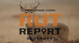 Southwest Rut Report: The Rut Is Hot in Arizona, New Mexico and South Texas