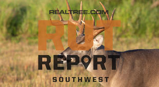 Southwest Rut Report: Arizona Is the Last State with Primary Rut Activity