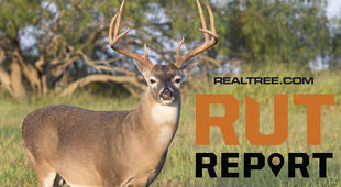Rut Report Image: Dennis W. Donohue / Shutterstock