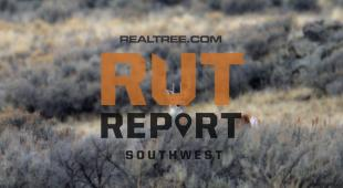 Southwest Rut Report: The Deer Hunting Is Good Right Now