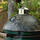 Realtree Camouflage Armor Shield for Big Green Egg®