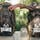 Nexgen Outfitters Whitetail Caddy Pack in Realtree Camo