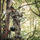 Hoyt Eclipse Women's Bow in Realtree EDGE Camo