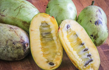The flavor of the pawpaw has been described as a cross between ripe banana and a mango.