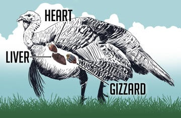 Wild turkey giblets make for tasty meals. Ryan Orndorff, Illustration