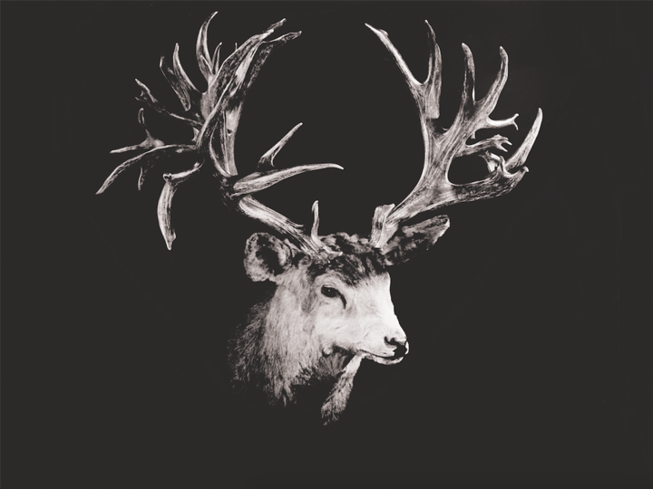 The Broder Buck: The World Record Non-Typical Mule Deer