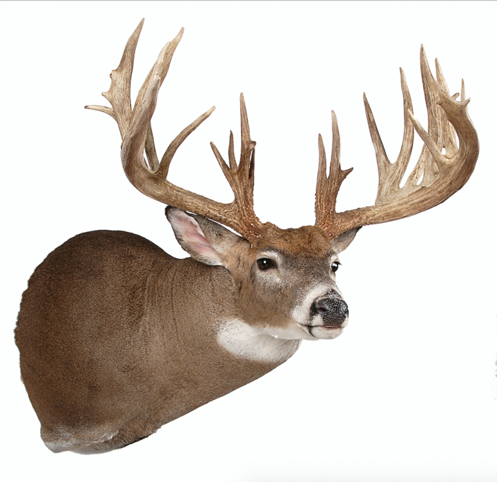 The Simmons Buck: A 275-Inch First Deer