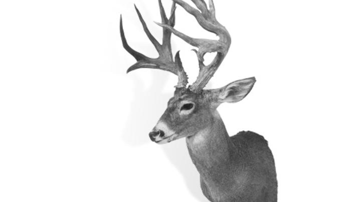 Deer Hunting in New Mexico Preview Image