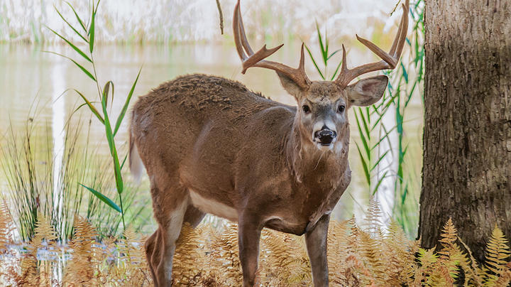 Deer Hunting in Mississippi Preview Image