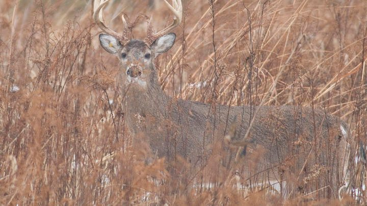 Deer Hunting in New Jersey Preview Image