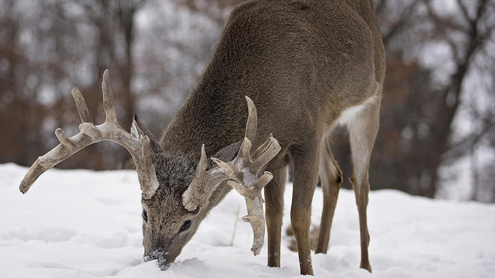 Deer Hunting in New York Preview Image
