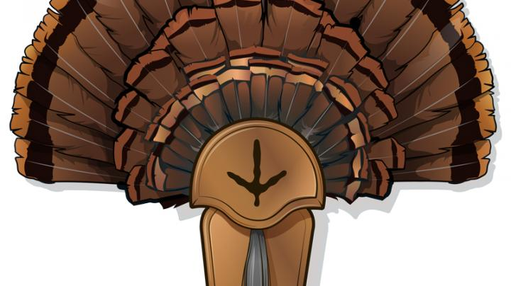 5 DIY Turkey Taxidermy Projects Preview Image