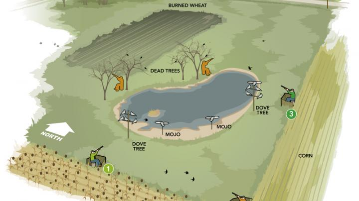 How to Build an Awesome Dove Hunting Field Preview Image