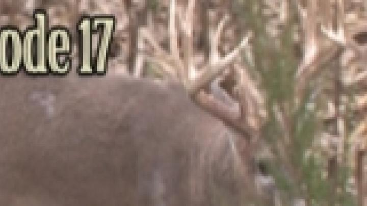 MW17: A 190 at 17 Yards Preview Image