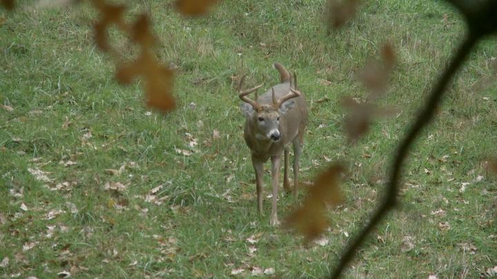 15-Yard Files: Bruiser Missouri Buck Tries to Jump the String Preview Image
