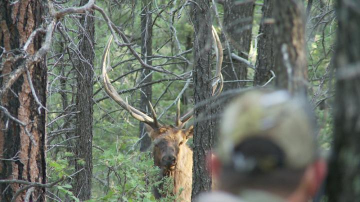 elk creek single guys Camping and summer adventures in the west elk our string of mountain horses live year round on his ranch on ohio creek nicest guys you'll ever meet.