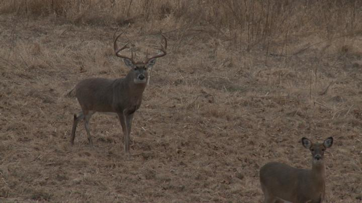 15-Yard Files: Aggressive Strategies Pull in 190-inch Buck Preview Image