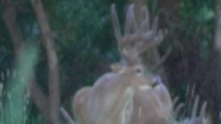 Midwest Whitetail Webisode 2 Preview Image