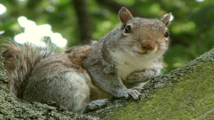 Squirrel Trapping - Gamekeeping at it's best Preview Image