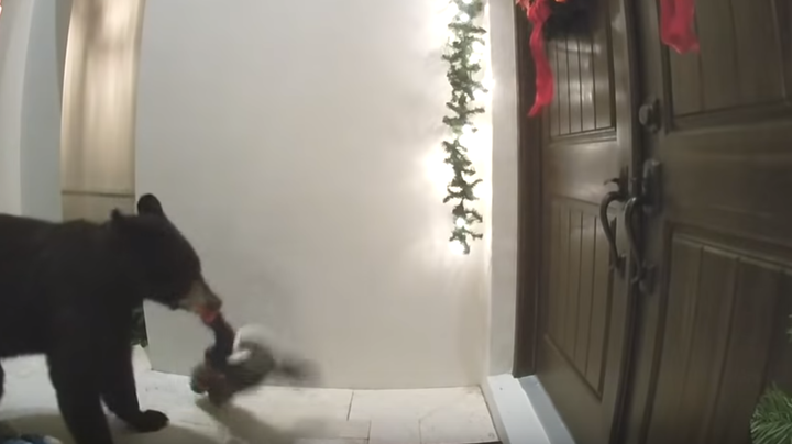 Watch Bear Knock Down Christmas Decor, Ring Doorbell Preview Image