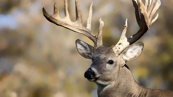 Exactly How Rare Are Boone and Crockett Whitetail Bucks? Preview Image