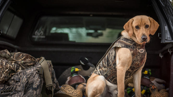 Waterfowl Road Trip Checklist Preview Image