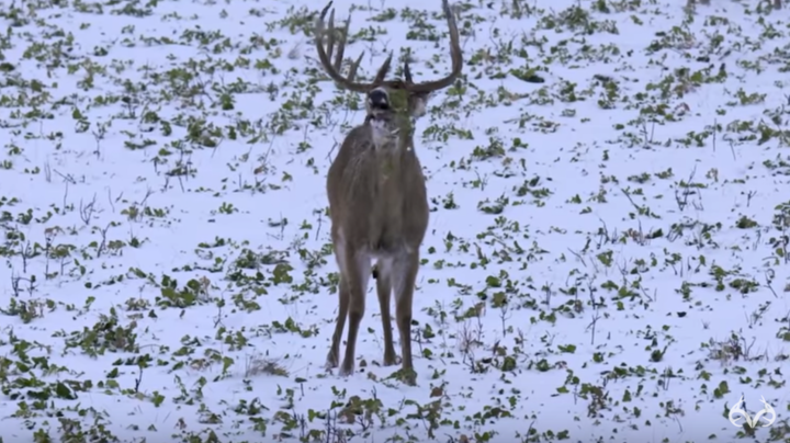 Hunting a Giant Late-Season Buck with a Crossbow Preview Image