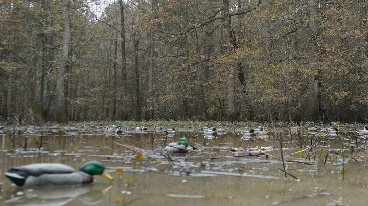 The X Waterfowl: Best Tips for Hunting Over Decoys; Taking the Focus Off Preview Image