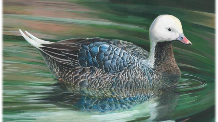 Georgia Teen Wins National Junior Duck Stamp Art Contest Preview Image