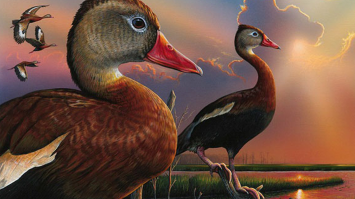 Federal Duck Stamp Contest Winner Crowned  Preview Image
