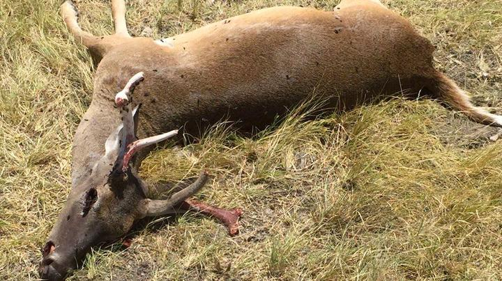 The Triangle of Death: Anthrax Outbreak Hits Southern Deer Herds Preview Image