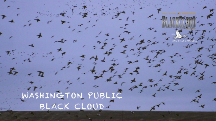 Black Cloud on Realtree 365 —Washington Public Green: iXnay Preview Image