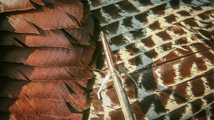 Expert Advice on Broadheads for Turkey Hunting Preview Image
