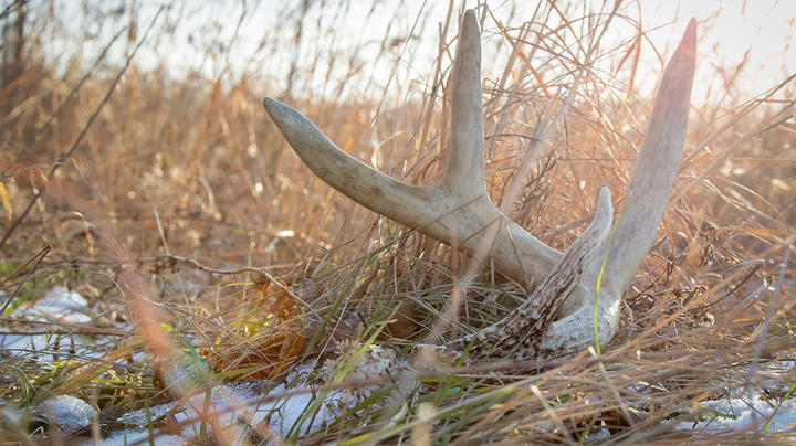 The Best Shed Hunting Tips Preview Image