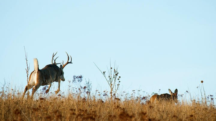 4 Best Times to Hunt the Whitetail Rut Preview Image