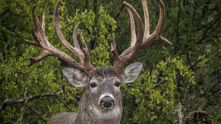 6 Things All Mature Bucks Do Preview Image