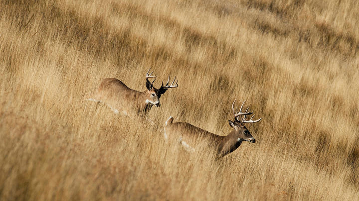 5 Great Spot-and-Stalk Prairie Whitetail Hunts Preview Image
