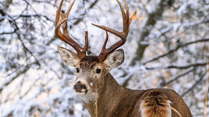 The Ultimate Late-Season Trail Camera Plan Preview Image