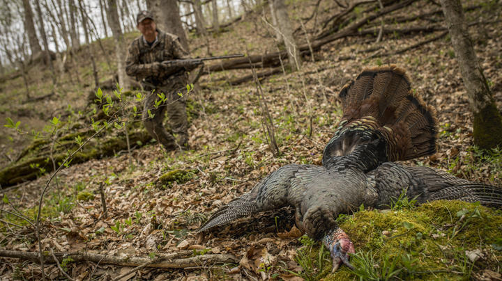 5 Tips for Hunting Tough Gobblers Preview Image
