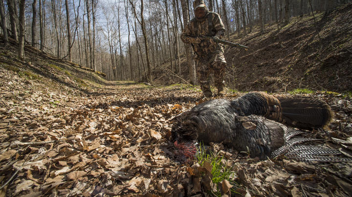 How to Find a Wounded Turkey Preview Image