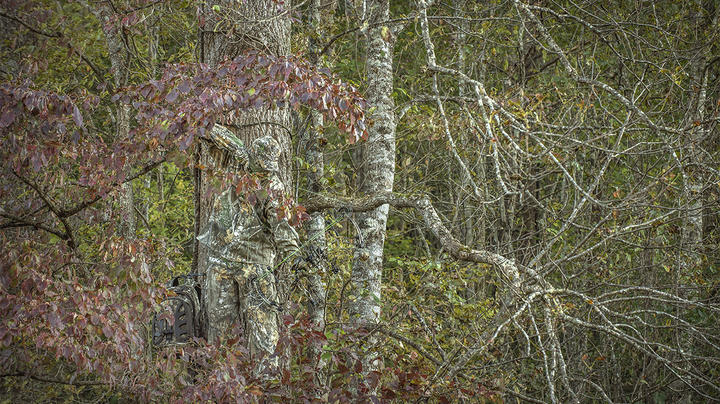 10 Tips for Deer Hunting in the South Preview Image