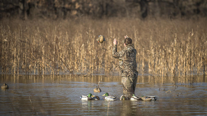 Central Flyway Action Ticks Upward as Ducks and Geese Head South Preview Image