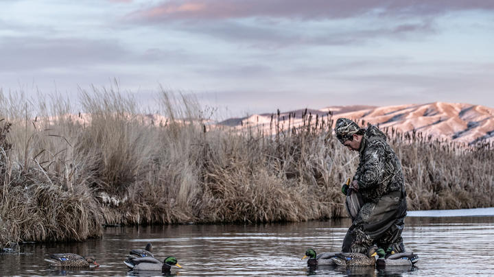 Pacific Flyway Waterfowl Action Off to Hot Start Preview Image