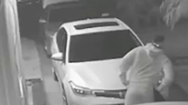Coyote Stops Thief From Breaking Into Car Preview Image