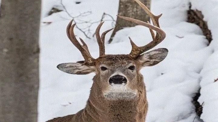 3-Antlered Buck Photo Goes Viral Preview Image
