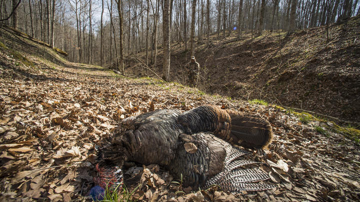 These 10 Things Can Ruin Your Turkey Hunt Preview Image