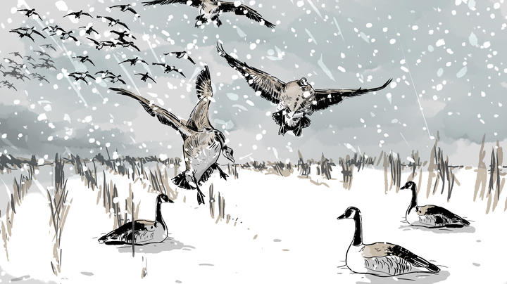 Duck Hunting in the Great Prairie Blizzard Preview Image