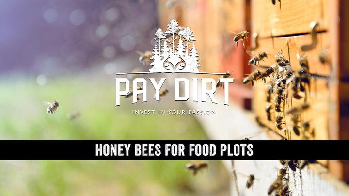 Pay Dirt: Honeybees and Food Plots, Plus a Mississippi Dream Farm Preview Image